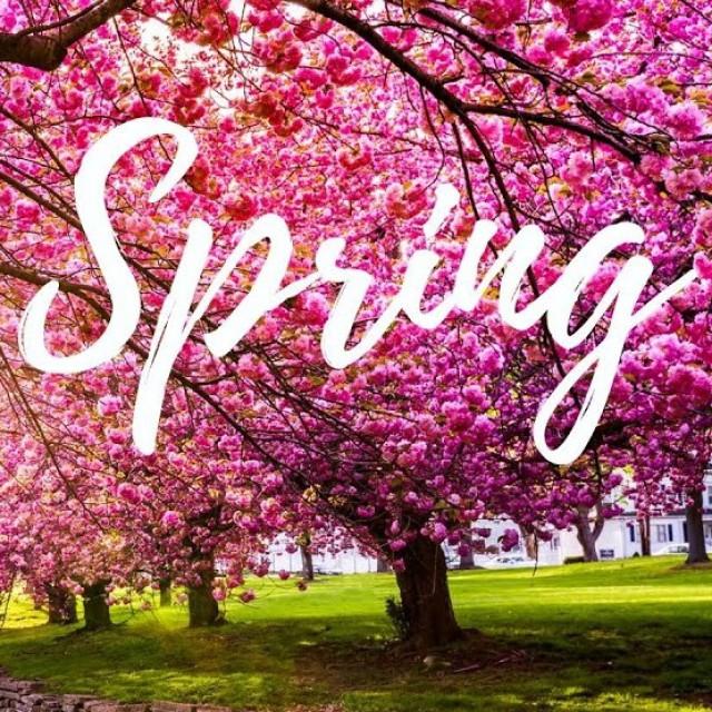 Spring Race 春季越野挑戰賽  2020